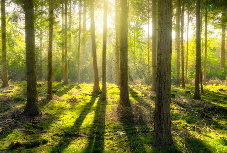 las i słońce prześwitujące przez drzewa